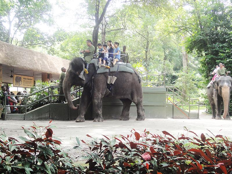 シンガポール動物園の見所は?ショップは何が売っている?