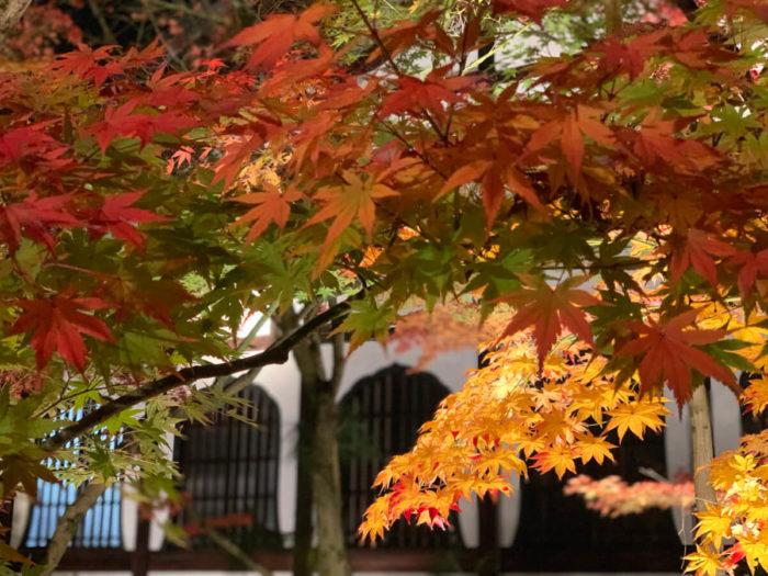 永観堂 禅林寺の紅葉ライトアップ